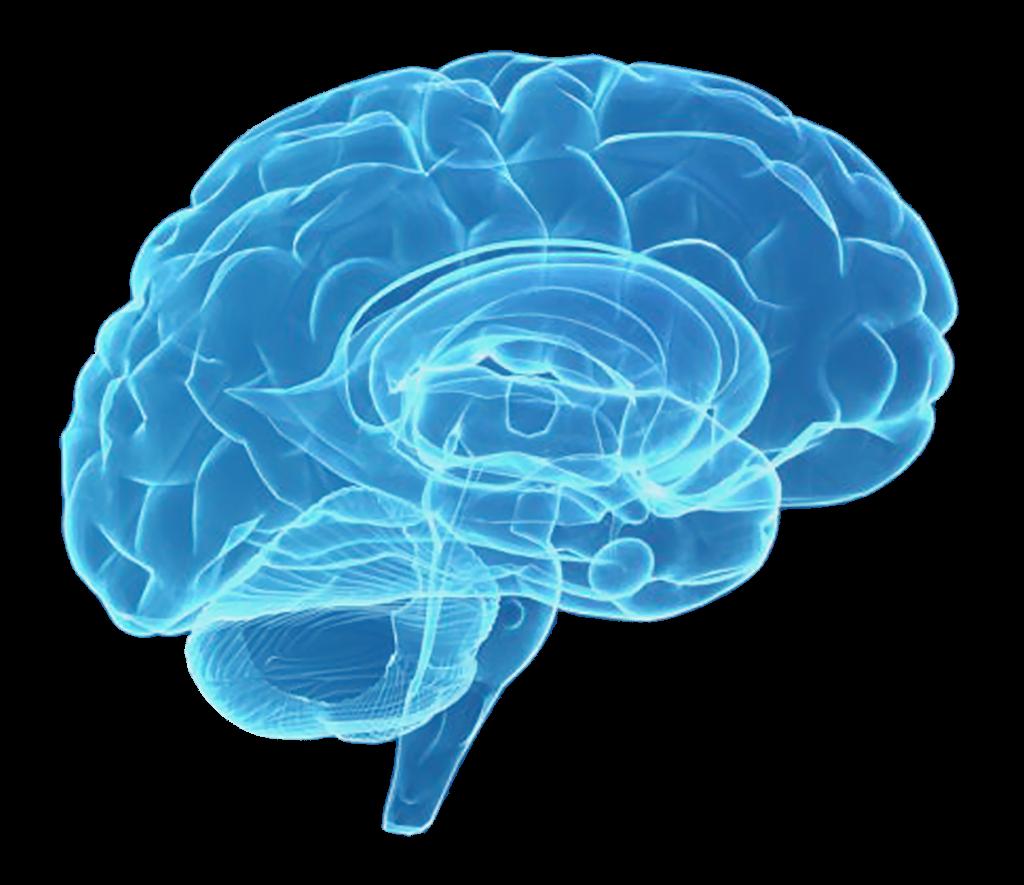 Brain dr Chulilla